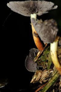 fungi lit by flash image