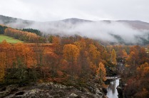 Highland trees and mist taken from train in autumn