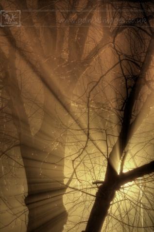 Light rays through a tree