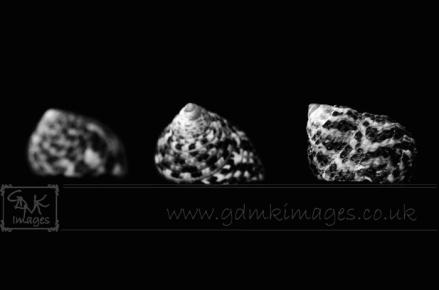Macro image of 3 seashells in black and white
