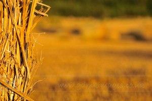 summer hay bale field