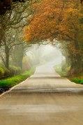 Foggy country lane