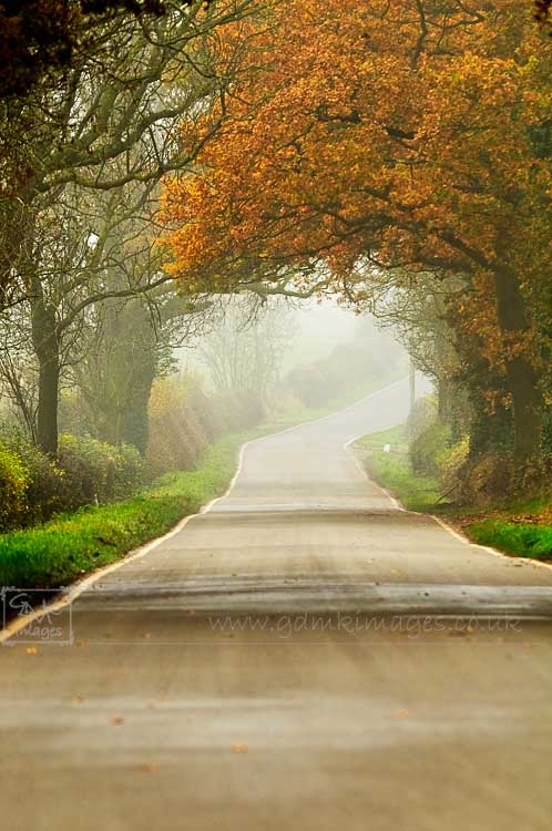 Foggy country lane