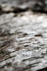 Silver Birch Texture
