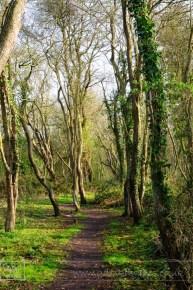 Wooded trail through the trees near Shenton