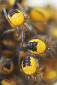 Baby Spiders Nest