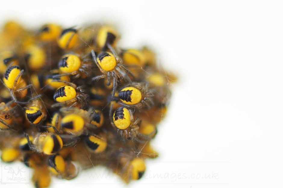 Baby Spiders Nest Extreme Closeup