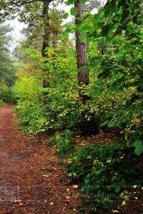 Sutton Cheney Wooded Walk