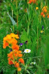 Wildflower garden overview